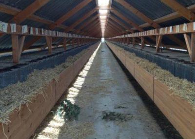 minkfarm01_595
